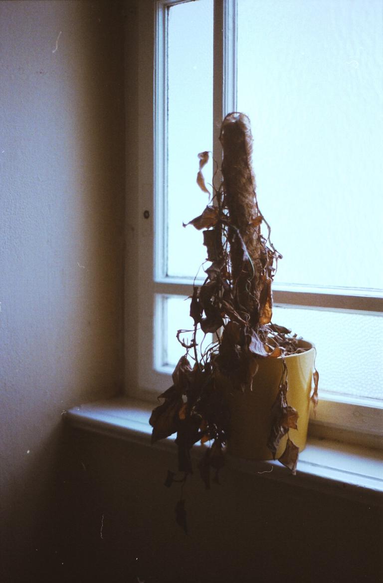 Louisa Stickelbruck Spaces unbelonging